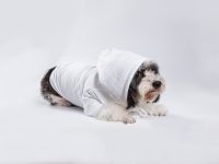 Sublimation Blank Dog Hoodie (White)