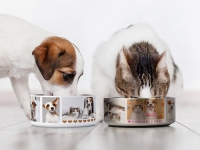42oz/1250ml Sublimation Blank Stainless Steel Dog Bowl (Silver)